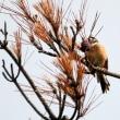 9/18探鳥記録写真-2(はまゆう公園からの眺望、ホオジロ、コゲラ)