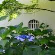 京都の隠れ紫陽花の名所-真如堂