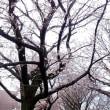 満開の桜の下を、自力で進めそうだ