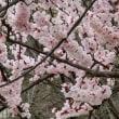 春の花3題