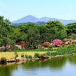 庭園に咲くクリンソウ 緑水苑 福島県郡山市