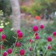 11月のアンジェのお庭