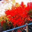 我が家 庭前の紅葉
