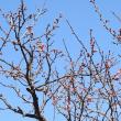 18 02 15号 slide & movie 梅の花