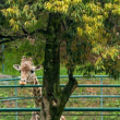 福岡市動物園キリン 140420