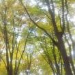 タケホープの埼玉うまいもの市場 11/11