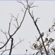 エナガやハクセキレイなどの野鳥