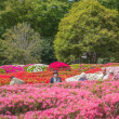 2018.04.19 神代植物公園: ツツジ、満開直前!