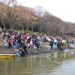 山田池公園の生き物捕獲