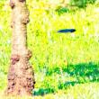 20/Jun 梅雨の中晴れの富士山と鳥たちと桔梗