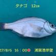 笑転爺の釣行記 8月6日☀ 浦賀港岸壁