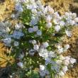 襟裳岬 どのような花がお好き?