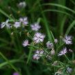 ひと月ほど、休みました。 ヒメビシの花を見たい!      2018.08.11.(1)