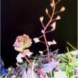 冬の公園の草花(長居・大阪市)    18・2.16