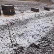 ルバーブは凍土の下で成長中