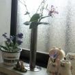 サバトラ、茶トラ子猫の小さな置物