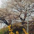 城下の桜2018