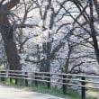 チャレンジ富士五湖ウルトラマラソン ~4日前