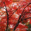 紅葉を追いかけて vol.7 (京都府・大圓寺)