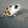 誰か、のら猫のミケを知らないか?