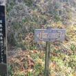 ミツマタ観賞 in 国東