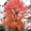 秋深まる ~近場での風景~