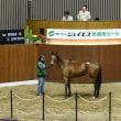 【ジェイエス・冬季繁殖馬セール2018(JS Company Winter Broodmare Sale)】は今週1/24(水)開催!
