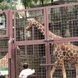 上野動物園へ