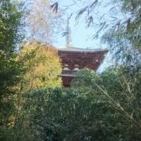 當麻寺 国宝だらけの歴史有るお寺だけど。。。