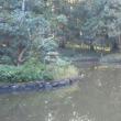 はがき絵   11月12日  神社の伐採  平川歌謡教室発表会 13日 紅葉狩り かかし 15日 女子会?