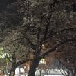 ★ 桜 ★
