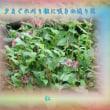 『 夕まぐれ刈り根に咲きぬ返り花 』物真似575冬zrk0205