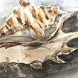 貝殻のモチーフ( レプリカ)