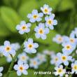 お花の植え替えの日々