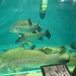 高知『桂浜水族館』
