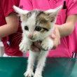 3匹の子猫保護・獣医さんで検査