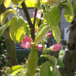 花、真っ盛り。。