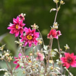 9月の花に思う