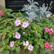 我が家の7月の花