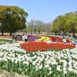 《花咲く万博記念公園と大阪造幣局桜の通り抜け》1。