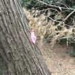 田園調布せせらぎ公園、富士見会館下の大木伐採の危機