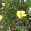 m邸の庭園