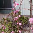 我が家にも春が来ました!