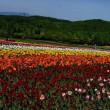 札幌 国営滝野すずらん丘陵公園