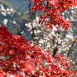 花も紅葉も2017