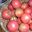 トマト 大安吉日 販売再開しました