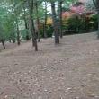 赤松林朝散歩 181116