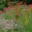 畑の草取り~秋の景色