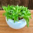 植物と鉢の幸せな関係