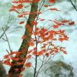 照葉峡の紅葉 3